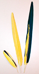 Yellow Blue & Gold Macaw Feathers