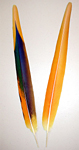 Yellow Camelot Macaw Secondary Tail Feathers