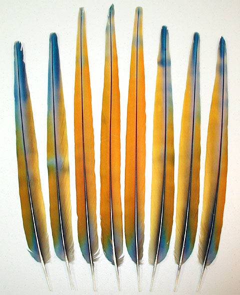 Camelot Macaw Tail Feathers - Seraphene